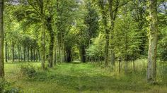 beautiful forest | posted by z ozi at 1 41 pm email this blogthis share to twitter share ...