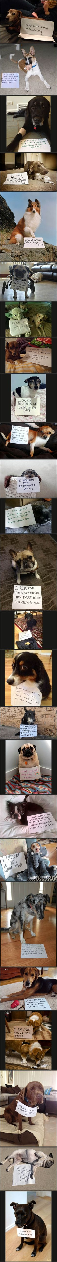 Dog shaming... Epic win...