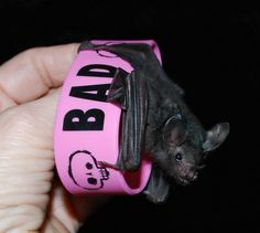 CUTE little bracelets $4.95 - 50% of purchase goes to help bats in need. :)  www.vamplets.com