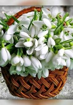 Ideas Flowers Photography Bouquet Beautiful For 2019 Exotic Flowers, Pretty Flowers, Fresh Flowers, Spring Flowers, White Flowers, Beautiful Flower Arrangements, Floral Arrangements, Beautiful Roses, Beautiful Gardens
