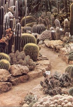 d-d-d:  disguise:   beautiful-portals:   cosmic-dust:  sweethotdrift mystic-lady  Cacti Path