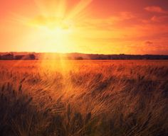 wheat Country Roads, Celestial, Sunset, Outdoor, Outdoors, Sunsets, Outdoor Games