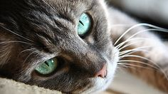 The Gifted Pet  ♥: Your Cat May Be Smarter Than You Think