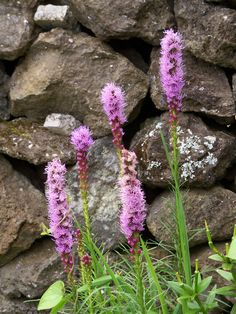 The trick to a lower maintenance garden is choosing plants suited to your growing conditions. Here are 10 good perennial flower candidates.