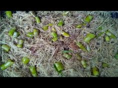 Ana Sayfa - YouTube Orchid Plant Care, Orchid Plants, Orchid Propagation, Dendrobium Nobile, Plant In Glass, Starting A Vegetable Garden, Vegetable Gardening, Indoor Flowering Plants, Growing Orchids