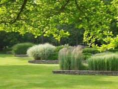 As an example of borders, exuberant ornamental grasses stand in sharp contrast above the manicured turf. Grasses featured here include Calamagrostis x acutiflora 'Karl Foerster,' Miscanthus sinensis, and Molinia caerulea subsp.