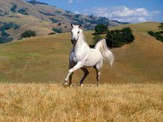 horses beautiful photos - Google Search