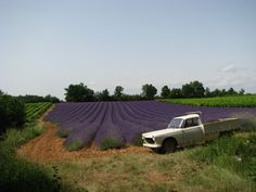 My Peugeot 404 Pick up & some french lavender.