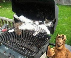 Haha, Alien Life Forms, Beautiful Creatures, Funny Cats, Cat Lovers, Dog Cat, Home Appliances, Instagram, Animals