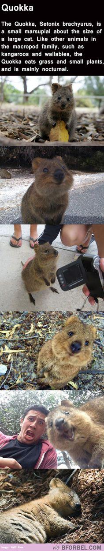 """Miks' Pics """"Animals l"""" board @ http://www.pinterest.com/msmgish/animals-l/"""