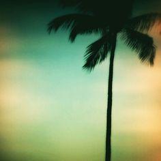Palm trees swayin'