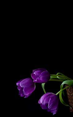 "mennyfox55: ""Tulipanes .. """