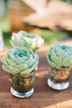 Succulent wedding favors #wedding #favor #inspiration #succulent