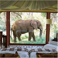 """""""How amazing would it be to see an elephant walk by your room on your honeymoon in South Africa! Wanderlust Travel, Adventure Awaits, Adventure Travel, Travel Trip, Travel Hacks, Travel Destinations, Beautiful World, Beautiful Places, Travel Photography Tumblr"""