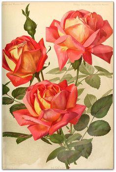 Vintage Roses Plate