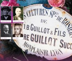Histoire de la roseraie Guillot, une roseraie familiale depuis 1829