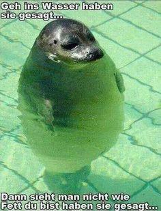 Geh ins Wasser haben sie gesagt..