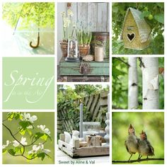 Spring Time, Spring Summer, I Need A Hobby, Collages, Beautiful Collage, Spring Awakening, Hello Spring, Color Themes, Paint Colors