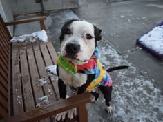 BARKO - A1101374 - - Brooklyn  TO BE DESTROYED 01/23/17: ****PUBLICLY ADOPTABLE**** -  Click for info & Current Status: http://nycdogs.urgentpodr.org/barko-a1101374/