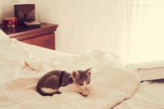 i want a kitten :(