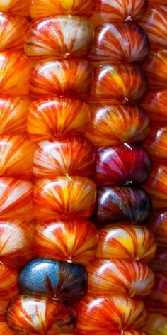Indian Corn- amazing what beauty exists when we take the time to really see what's in front of us!
