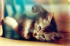 zezinho gato - Pesquisa Google