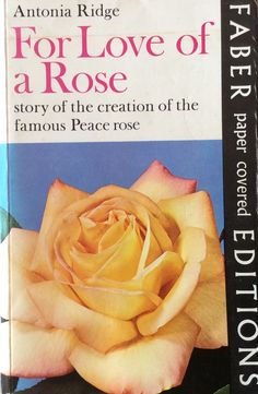 The story of the Peace Rose (Madame Meilland)
