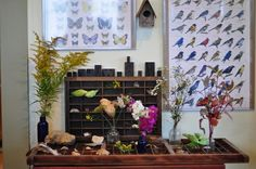 nature display for the classroom! - love bringing nature into the urban classroom