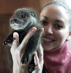 This Picture Of A Woman's Face With A Baby Otter Sleeping On It Will Make You Want To Be This Woman's Face