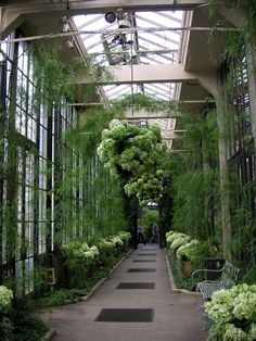 Longwood Gardens hall of hydrangeas | Flickr - Photo Sharing!