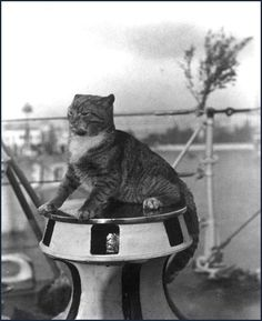 "So cute! USS Flusser cat ""Wockle"" on the capstan in Venice, Italy, 1924-25 