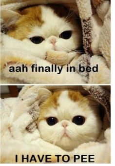 a75092b1101c834a55fd6525751cf341 funny love pictures quote pictures blushing kitty cute animals ( pinterest kitty, cat and animal