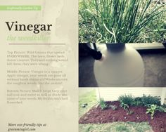 Eco-friendly Garden Tip: Kill Weeds with Vinegar and Mulch Your Flower Beds - greenmtngirl.com