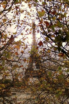 coffee-and-wood:  Autumn in Paris