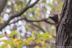 Scoiattolino in fuga su un albero :)