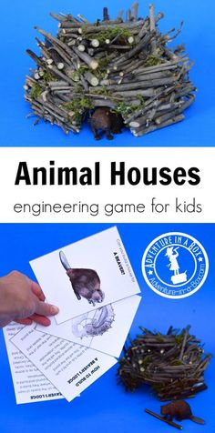 Animal Houses: Engineering Game for Kids Using this nature-inspired engineering game for kids, you will learn about ten animals and the amazing houses they build, then complete the engineering challenges and build your own versions of these dwellings! Steam Activities, Nature Activities, Science Activities, Animal Activities For Kids, Science Books, Science Education, Science Experiments, Preschool Science, Science For Kids