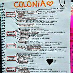 """#RESUMO #HISTÓRIA #BRASIL #COLÔNIA #INÍCIO <span class=""""emoji emoji2764""""></span><span class=""""emoji emoji2764""""></span><span class=""""emoji emoji2764""""></span> Também já está disponível para download no blog ..."""