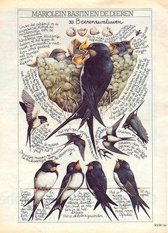 swallows journal page 'en de dieren' watercolor artist: Marjolein Bastin Marjolein Bastin, Petit Tattoo, Nature Artists, Bird Artists, Nature Sketch, Nature Journal, Dutch Artists, Nature Paintings, Gravure