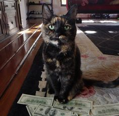 Top-Secret Tips to Get Your Cats to Pose for Your Camera | Catster (Love me a tortie!)