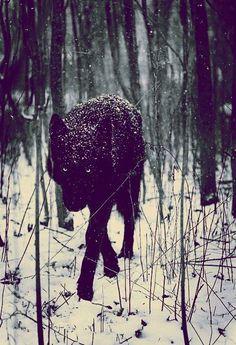 Lone Black wolf.