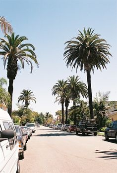#palmtree #road #summer