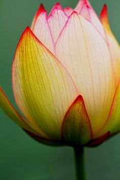 ~~Lotus macro by Everywhere Everytime with Bombo ~~