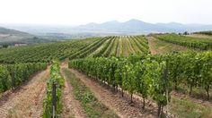 Above the vineyard Makovisko