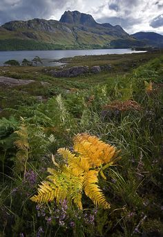 ༺✿Lochs of Torridon dotted with stands of charismatic Scots pine below thelofty peaks of Slioch and Liathach. Further south the wild beauty of Glencoe and Glenfinnan. Slioch and Loch Maree, Torridon