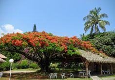 land diving pentecost island vanuatu