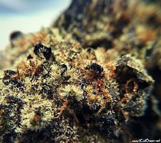 Obama Kush http://www.kidocean.net Click image for the hottest beats on the net.