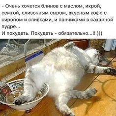 . Cute Baby Animals, Funny Animals, Animals And Pets, Russian Humor, Funny Memes, Jokes, Funny Cats And Dogs, Clever Quotes, How To Stay Awake