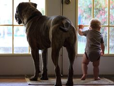 The Bullmastiff checks outside with his little buddy.