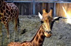 Imaginarium: Animals Experience
