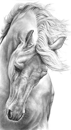 free, a Charcoal on Paper by Heidi Kriel from South Africa. It portrays: Animal, relevant to: White horse, flowing mane horse, graphite drawing horse, horse, running horse what is better than to draw a free running white horse with beautiful  flowing mane...:)